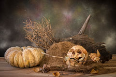 Still life with human skull hold dry rose in the mouth Royalty Free Stock Photos