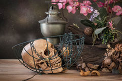 Still life with human skull hold dry rose in the mouth Royalty Free Stock Photography