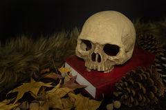 Still life human skull and maple leaf Stock Images