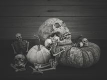Still life with human skull and pumpkin. Vintage style stock images