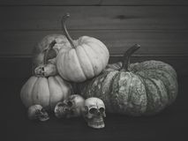 Still life with human skull and pumpkin. Vintage style royalty free stock photography