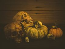 Still life with human skull and pumpkin. Vintage style royalty free stock photo