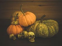 Still life with human skull and pumpkin. Vintage style royalty free stock image