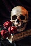 Still life with human skull royalty free stock image