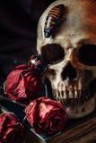 Still life with human skull royalty free stock photos