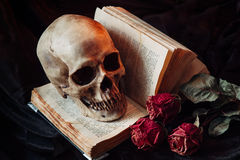 Still life with human skull Royalty Free Stock Photography