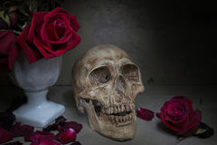 Still life human skull Royalty Free Stock Photography