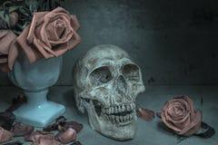 Still life human skull Stock Photos
