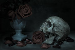 Still life human skull Royalty Free Stock Photos