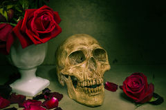 Still life human skull Royalty Free Stock Photo