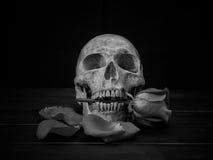 Still life human skull and rose royalty free stock photos