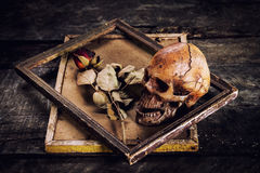 Still life with human skull and roses dried in a picture frame Royalty Free Stock Photo