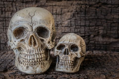 Still life with human skull on wooden table Stock Images