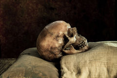 Still life with human skulls in a supine position. On background royalty free stock photography