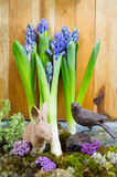 Still life with Hyacinth on moss and wood background in rustic r Royalty Free Stock Photography