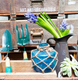 Still life with Hyacinth in vintage cabinet wood at rustic inte Royalty Free Stock Photo