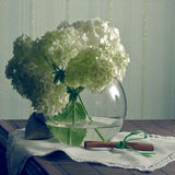 Still life with hydrangea. In soft colors Stock Image