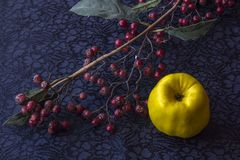 Still life - ikebana of branch with dried berries and quince. Textile background stock photo