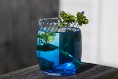 A still life image with little plants and blue flowers Stock Photos