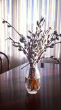 Still life interior, willow blossoms in glass vase Stock Photography