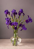 Still life with iris. Still life with fresh irises. Spring time flowers Stock Images