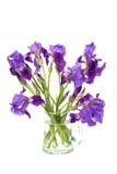 Still life with irises. In vase isolated on white background Stock Photo