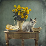 Still life and kitten Stock Image