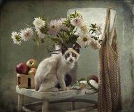 Still life and kitten Royalty Free Stock Photo