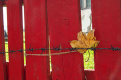 Still life with leaf and red fence stock photography