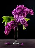 Still life with lilac flowers Stock Photography