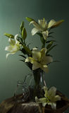 Still life with lily Royalty Free Stock Photo