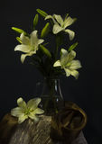 Still life with lily Royalty Free Stock Photography