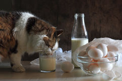 Still life with a living lady-cat and milk Stock Photography