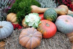 Still life with lot of flowers and autumn vegetables on hay Stock Image