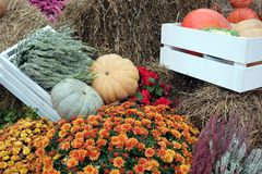 Still life with lot of flowers and autumn vegetables on hay Stock Images