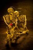 Still life love skull Stock Photos
