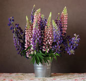 Still life with lupins. stock photos