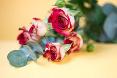 Still life with lying bouquet of red-white roses Royalty Free Stock Photo