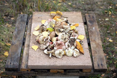 Still life with many edible mushrooms on old brown wooden table Stock Photo