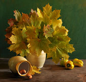 still life with maple leaves Stock Photo