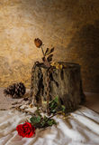 Still Life Metaphorical roses. Stock Images