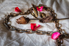 Still Life Metaphorical roses . Stock Images