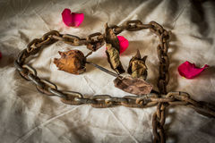 Still Life Metaphorical roses . royalty free stock photos