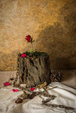 Still Life Metaphorical roses . Royalty Free Stock Photos