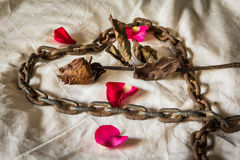 Still Life Metaphorical roses . Royalty Free Stock Images