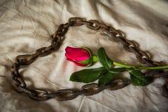 Still Life Metaphorical roses . Stock Photo