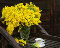 Still life with mimosa's yellow spring flowers. Stock Image