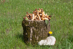 Still life with mushrooms. Still life with morels on a wooden stump Royalty Free Stock Image