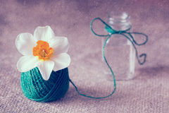 Still life with narcissus. Narcissus in a tangle of linen thread. Stock Photos