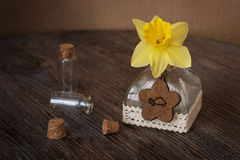 Still life with Narcissus and small bottles. Narcissus in a bottle on a wooden table. Royalty Free Stock Images